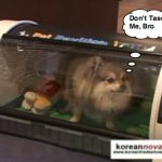 Korean Dog House Looks Like a Rotisserie Oven, Heats Up Your Pooch