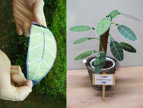solar leaves Pinboard