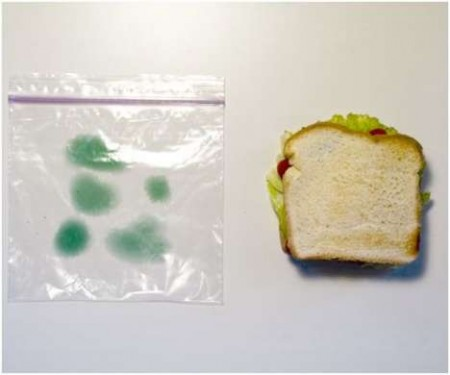Fake Mold Sandwich Bags will Stop Lunchroom Thieves