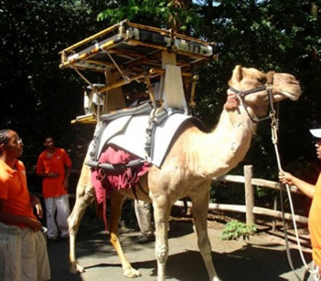 Solar Powered Drug Carrying Camel