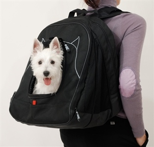 Laptop Bag Dog Carrier holds a Laptop and a Lapdog