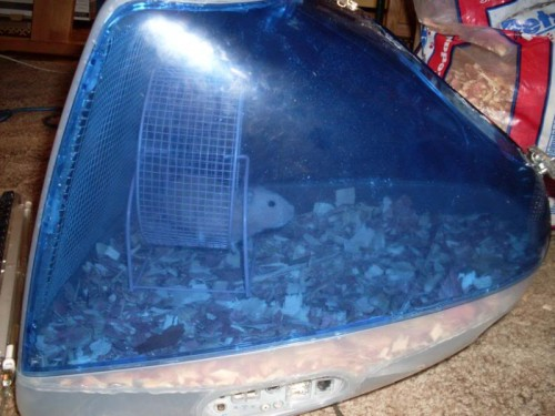 imac hamster 500x375 iMac Hamster Cage is the Geekiest Pet Housing Ever