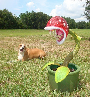 Life Sized Super Mario Piranha Plant