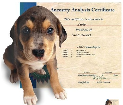 canine ancestry