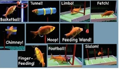 r2 fish school kit