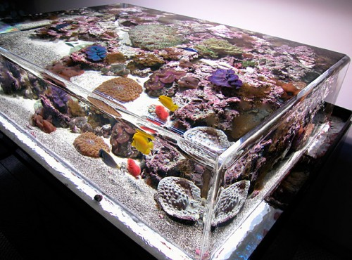 ZeroEdge Aquariums Are Like Infinity Pools for your Fish