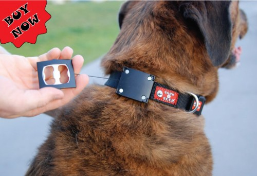 bark for beer 500x342 Make Your Dog the Ultimate Party Animal with the Dog Collar Bottle Opener