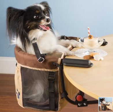 A High Chair for Your Pet