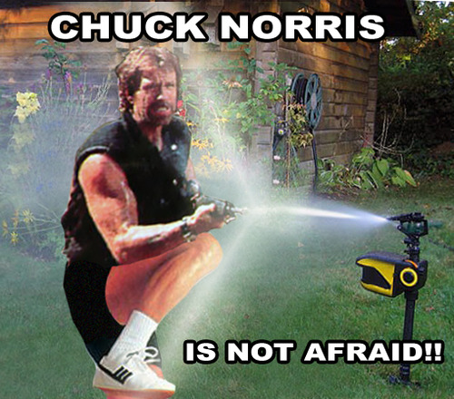 chuck norris sprinkler Scarecrow Motion Activated Sprinkler Keeps Pests Away, Internet Meme Alive