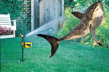 sprinkler shark Scarecrow Motion Activated Sprinkler Keeps Pests Away, Internet Meme Alive