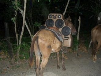 Donkey with Six Speaker Stereo