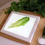 Bug Checker Kitchen Light Board
