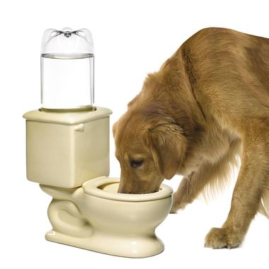 toilet dog bowl Pinboard