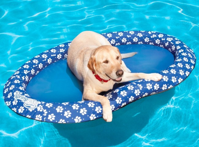 dog pool float 650x482 Pool Float for Dogs