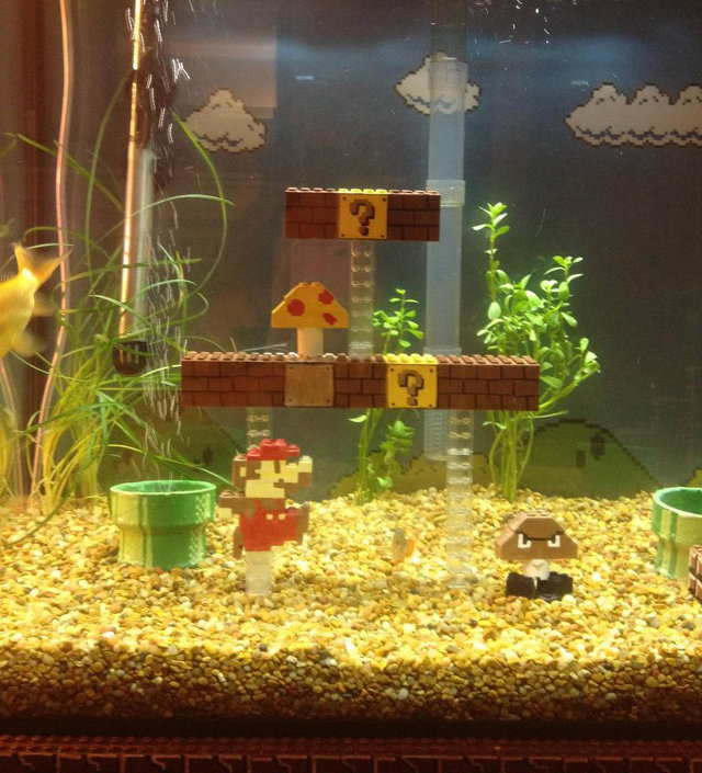 > More Pics: Cool Super Mario Bros Aquarium - Photo posted in BX GameSpot | Sign in and leave a comment below!
