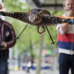 Man Turns Dead Stuffed Cat Into a Helicopter (WTF?)