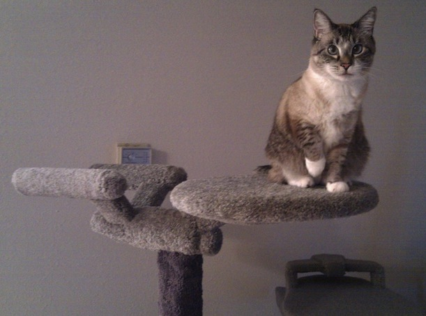 star trek cat Star Trek Enterprise Cat Tree