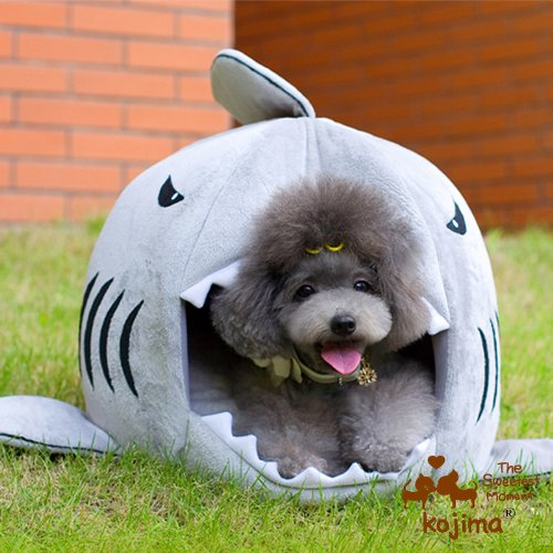shark dog bed Pinboard