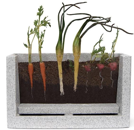 Watch it Grow: Root Vue Farm
