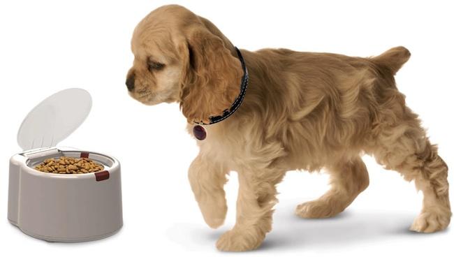 microchip pet feeder Pinboard