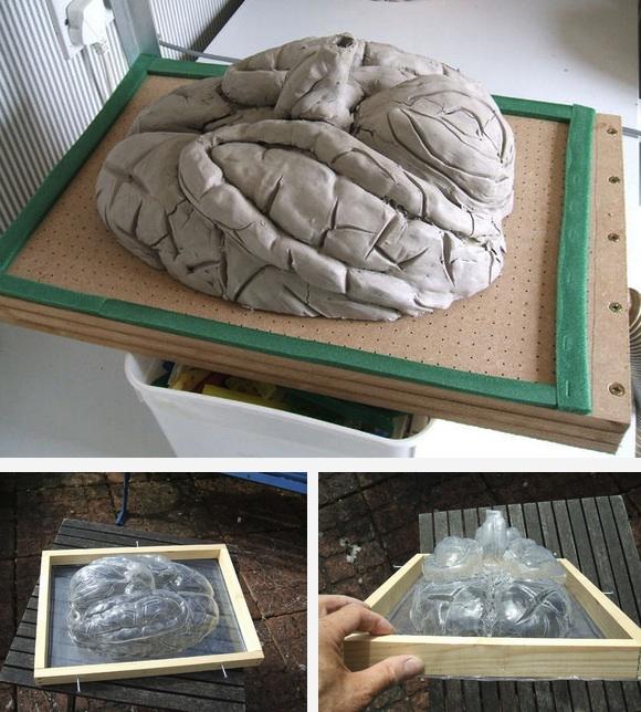 brain forming