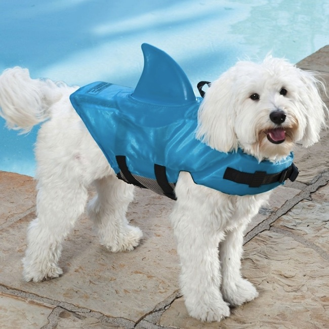 shark fin dog life jacket Pinboard