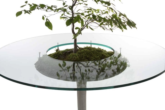 table with plant top