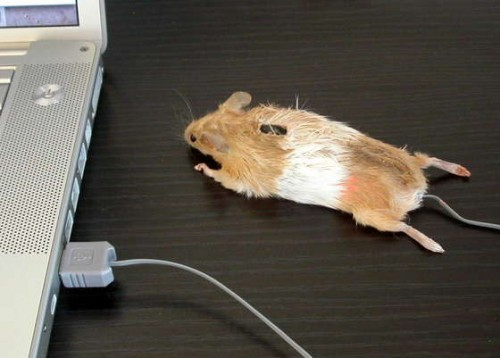 Stuffed Taxidermied Mouse Computer Mouse